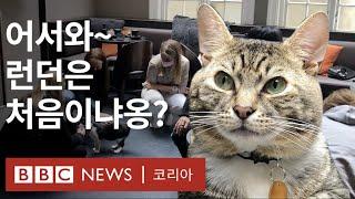 유기묘가 가득한 런던의 고양이 카페 - BBC News…