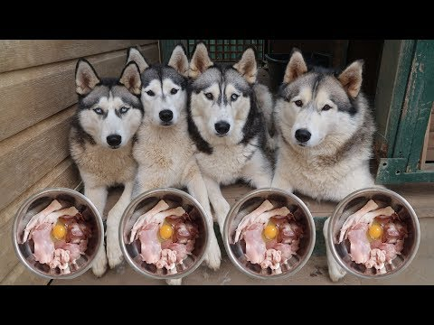 WHAT MY 4 HUSKIES EAT FOR BREAKFAST! (RAW FOOD DIET) | LIFE WITH 4 HUSKIES | VLOG!