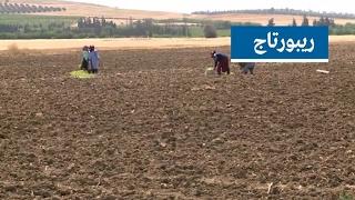 ما أسباب تراجع استعمال البذور والمشاتل المحلية في تونس؟