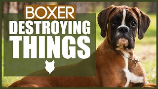 How To Stop Your BOXER Destroying Things