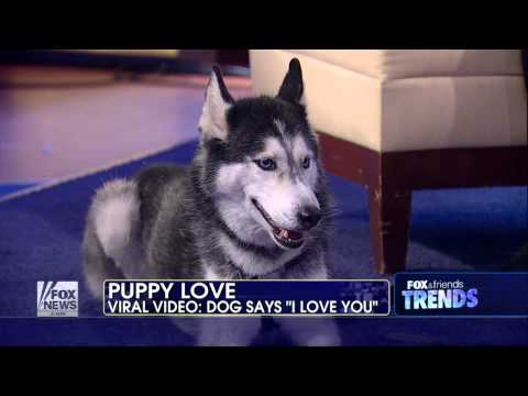 Mishka the talking dog goes viral   Fox News Video