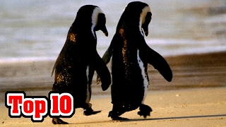 Top 10 FACTS That Will Make You HAPPY