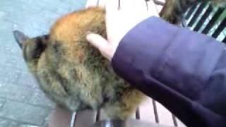 【猫】尻尾の付け根が良いのですか