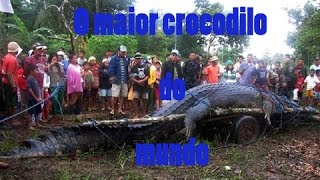O Maior Crocodilo Do Mundo
