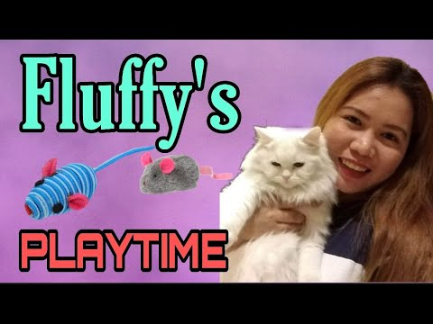 Fluffy's Play Time | Turkish Angora Breed