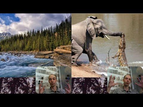 Смотреть клип Напряженные животные, сантехники и домохозяйки / Психоделика (#НиОЧем - 5) онлайн бесплатно в качестве