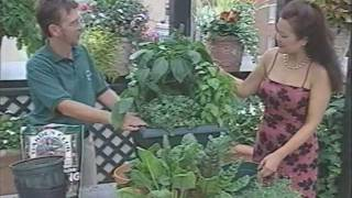 Common Sense Gardener Explains Patio Gardening Tips & Tricks