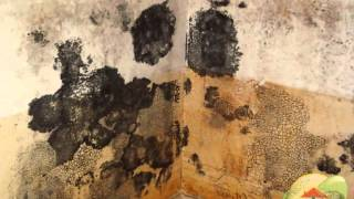 Learn how to Remove Black Mold and Prevent Cross Contamination, San Diego CA