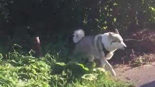 В Орле с подачи хозяйки собака загрызла котёнка