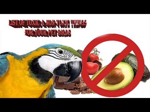 List Of Toxic And Non Toxic Things || For Your Pet Bird