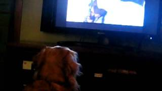 George hits the tv thumbnail