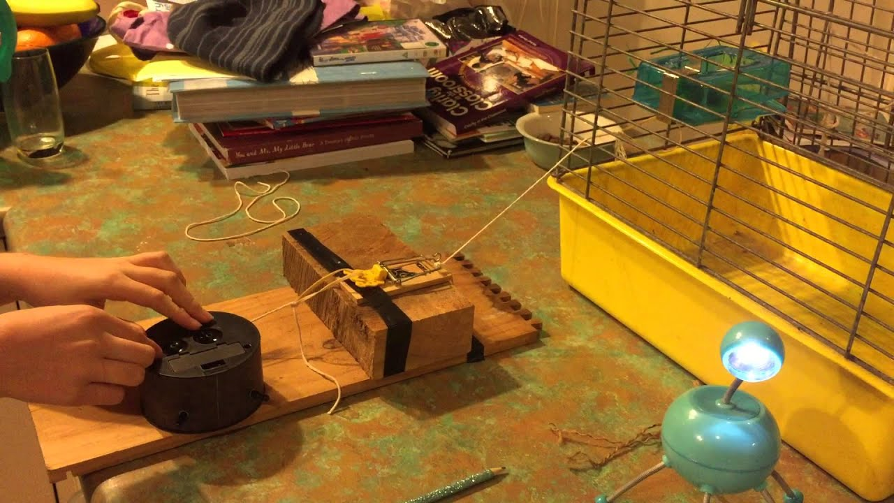 for guinea carousell pigs feeder pet on pig rabbitschinchillasguinea rabbits chinchillas hay food p supplies and bin