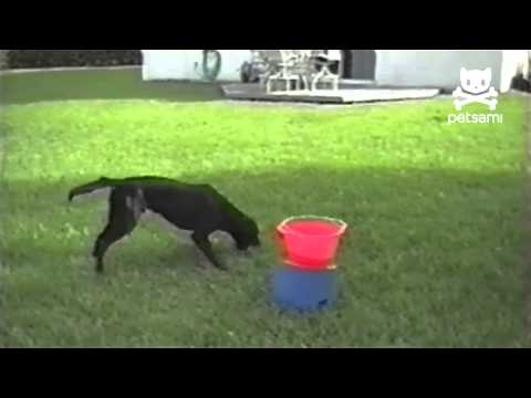 Dog loves automatic ball throwing machine