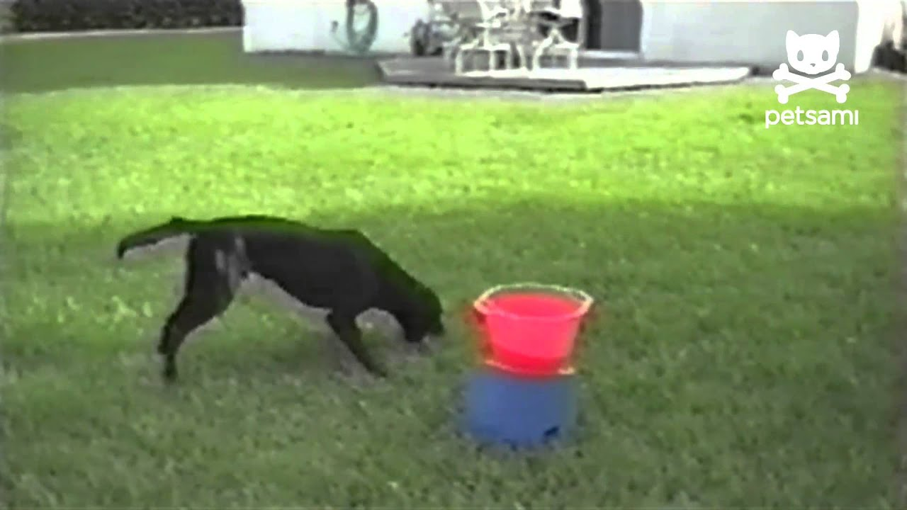 Youtube Video Dog Automatic Ball Thrower