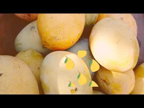 HOW TO FARM MANGOES,GHANAIANS ARE FARMING NOW/Mango Plantations