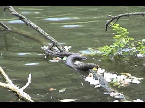 Snake fishing in boone north carolina youtube for Fishing in boone nc