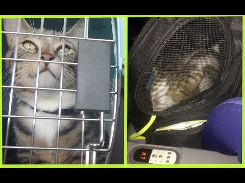 Cats On A Plane! | How We Traveled With Our Cats (Cargo And Cabin)