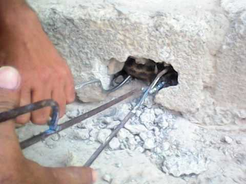 صياد الثعابين و الافاعي الاختصاصي الوحيد في تونس