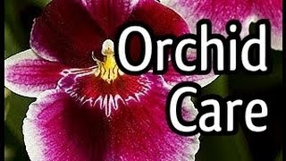 Miltoniopsis Orchid Care and how to bloom your Orchid. Tips for Orchid watering and lighting too