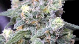 Cypress Hill Roll it up Light it up marijuana.
