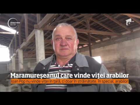 Ioan Pop, maramureșeanul care vinde tauri arabilor
