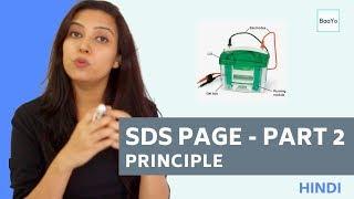 SDS PAGE  | Part 2 - Principle | Hindi