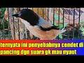 Cara Mengatasi Cendet Di Pancing Gk Mau Bunyi  Mp3 - Mp4 Download