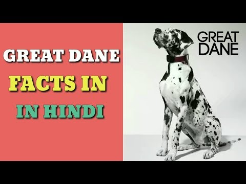Great Dane facts | in Hindi | Great Dane | tallest dog | great Dane information