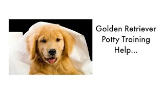 Potty Training Your Golden Retriever Puppy. Golden Retriever Housebreaking Tips Puppy Potty Training