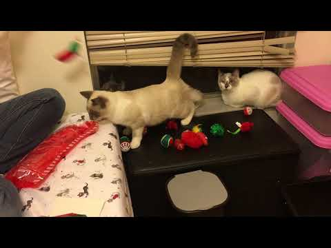 Kittens Get Christmas Presents! Amazon Wishes Granted!