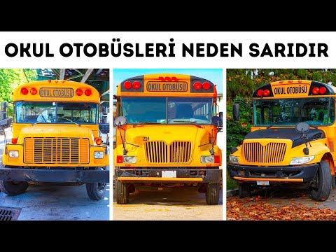 Okul Otobüsleri Neden Sarıdır