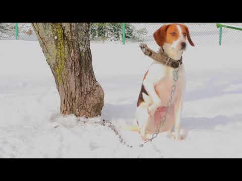 Oakland County Animal Control Cold Weather PSA