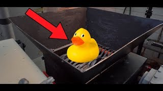 Shredding Rubber Duck Family