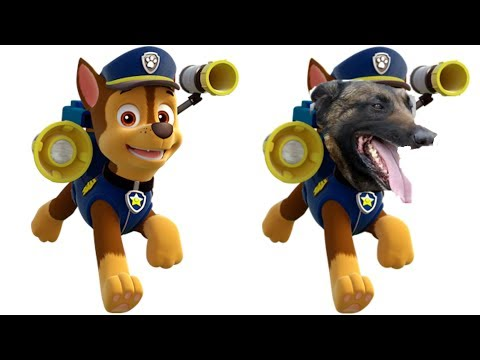 10 Paw Patrol Dogs Characters In Real Life