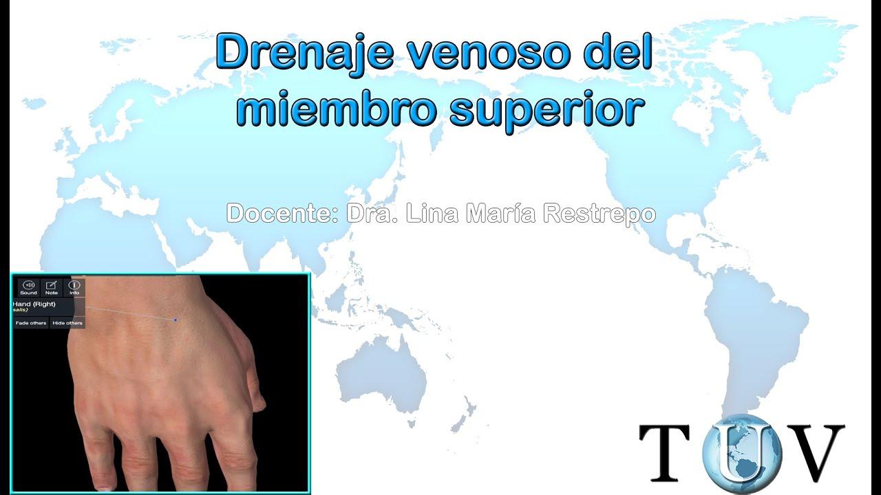 Drenaje venoso del miembro superior - Anatomía del cuerpo humano ...