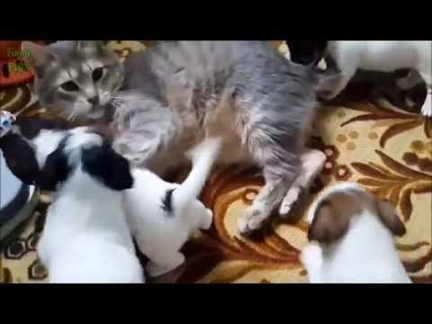 cats-meeting-puppies-for-the-first-time