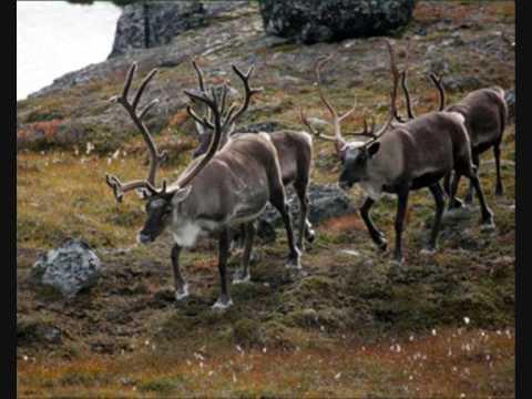 Grønland i billeder/Greenland in pictures