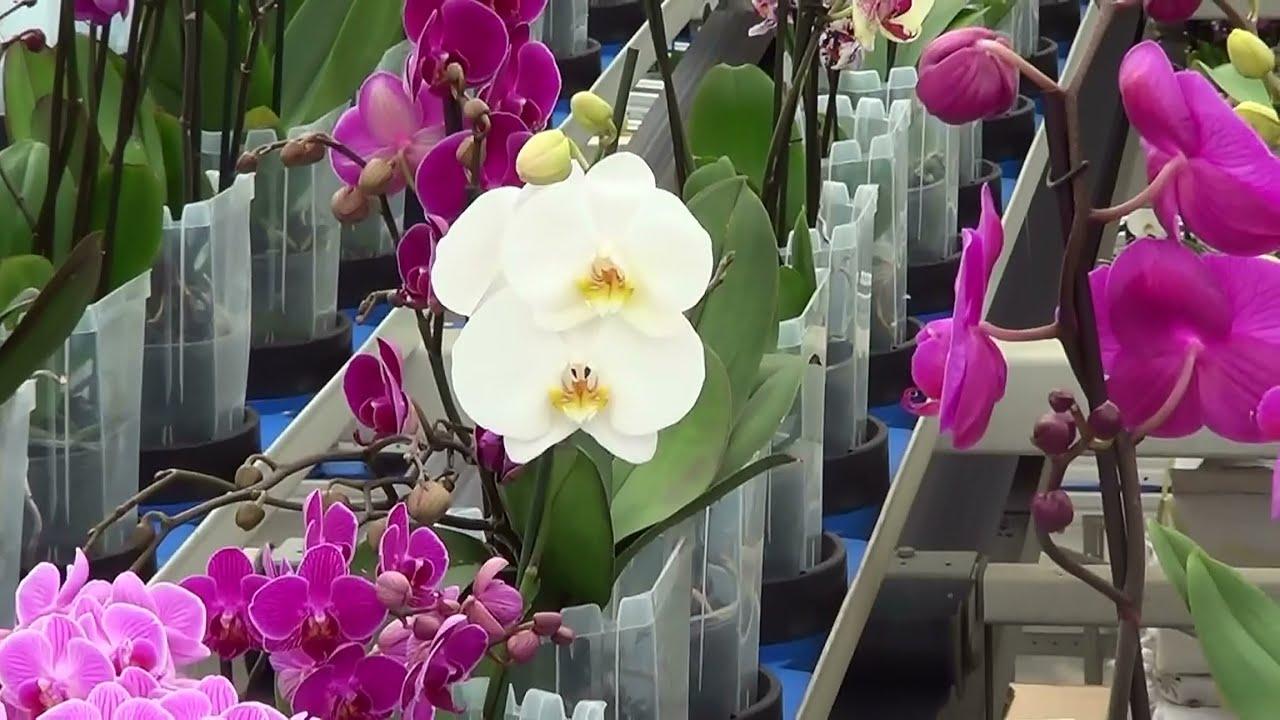 orchidee w polsce
