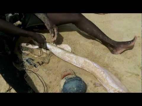 Déculottage d'une Murène à Coco beach -  Lomé - Togo.mp4