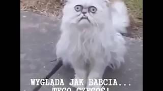Zwariowany kot w domu jego mamy!