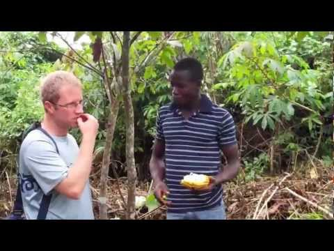Visiting a cocoa farm in the Ivory Coast - Part 1