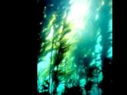 Portable - Kelp .mov