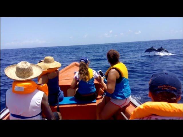 Au Fil des Anses : Balade en mer avec les dauphins à Grand'Rivière en Martinique