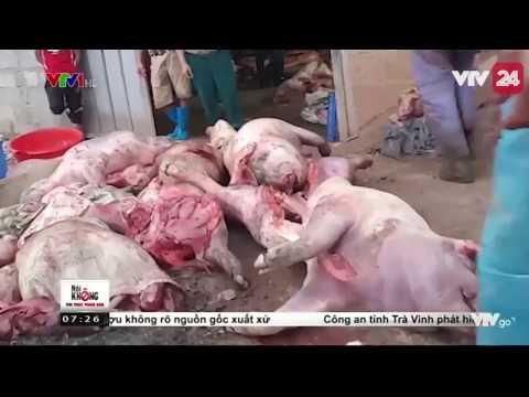 Mua Lợn Chết Để Chế Biến Thành Lợn Hun khói