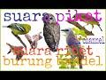 Suara Burung Ribut Buat Burung Yang Bandel Mau Turun Arif Channel  Mp3 - Mp4 Download