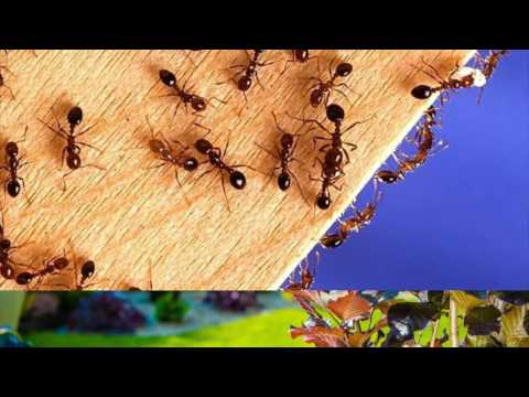 Termite Treatment Springtown TX 76082 Ant Control