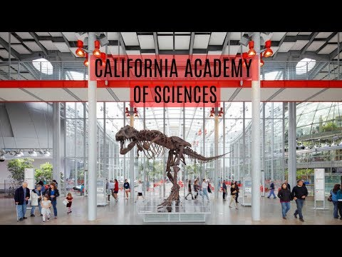 DAY VLOG | California Academy of Sciences SF