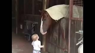 Cute baby girl kissing horses