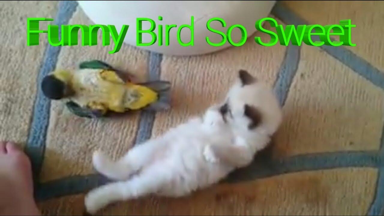 Download 40+ Gambar Burung Lucu Bikin Ngakak Terbaru