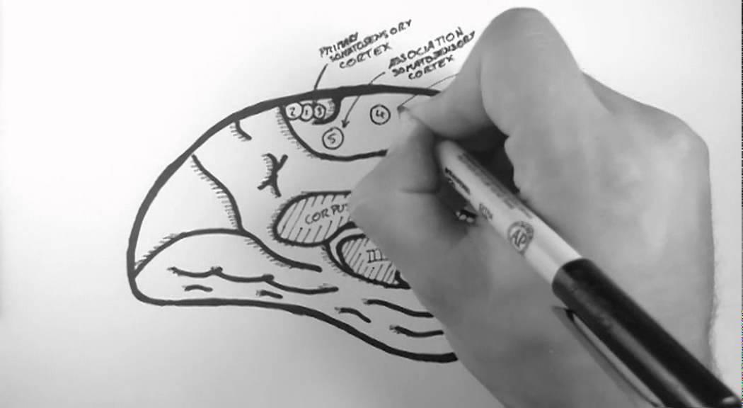 Brain Anatomy 4 Functional Cortical Anatomy Medial Surface Youtube